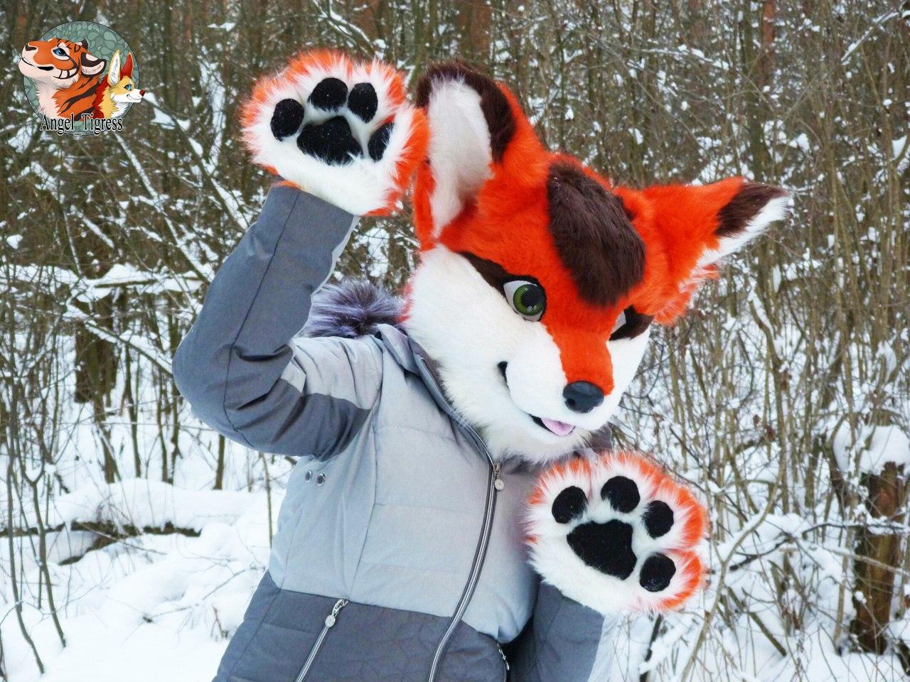 Partial Fursuit Photo Cute fox